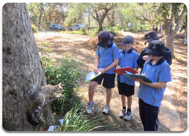 Students studying a preserved Possum at Balls Head Reserve
