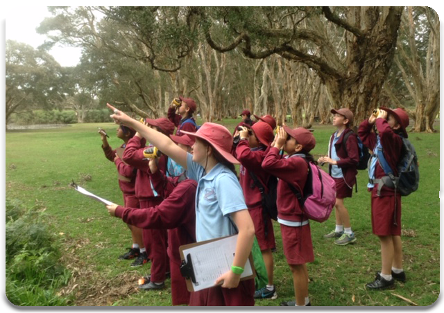 Students observing Flying Foxes in Centennial Park